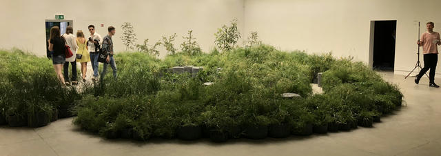 The gallery space displayed threatened grassland species indigenous to the Western Plains of Victoria, Australia. The act of transposing the plants highlights the precursor process of growth (and horticultural expertise) needed to produce them alongside the technologies (a diurnal simulation) and maintenance practices required to sustain them within an environment designed for people.